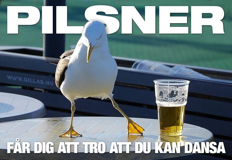 Fiskmås jämte öl på bord - Öl, får dig att tro att du kan dansa