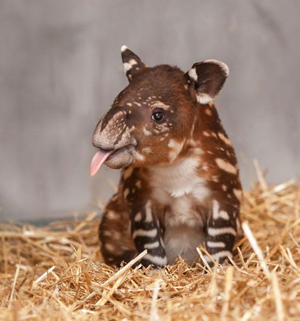 39 av de allra sötaste djurungar du någonsin sett!