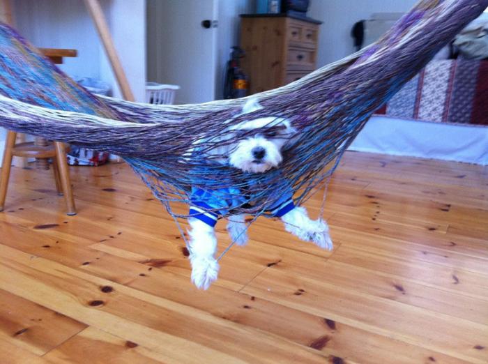 roliga-bilder-hundar-som-gjort-daliga-val-09
