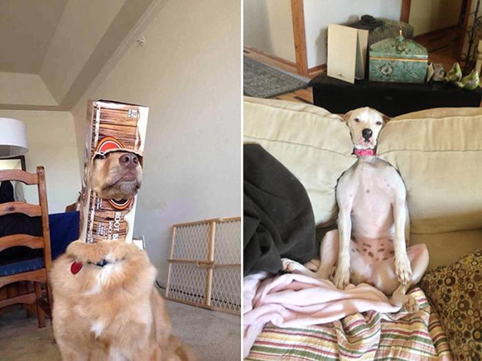 roliga-bilder-hundar-som-gjort-daliga-val-11