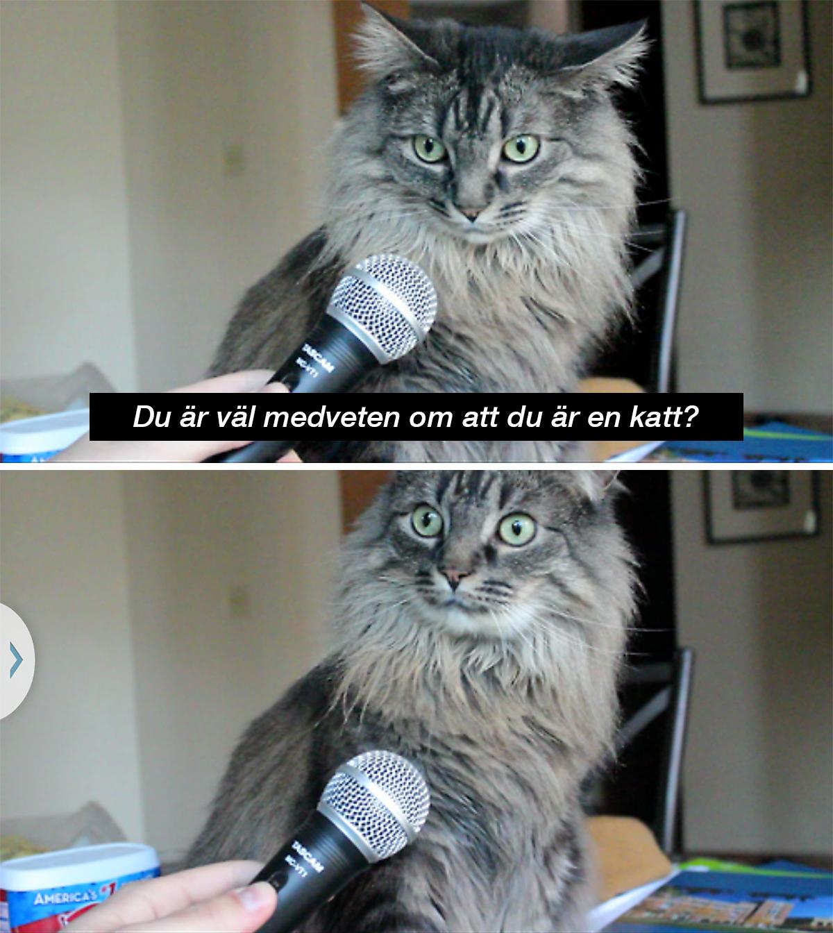 Katt blir intervjuad - Du är väl medveten om att du är en katt?