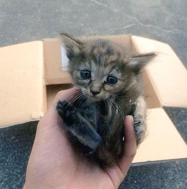 Denna supersöta kattunge blev adopterad av 5 illrar!