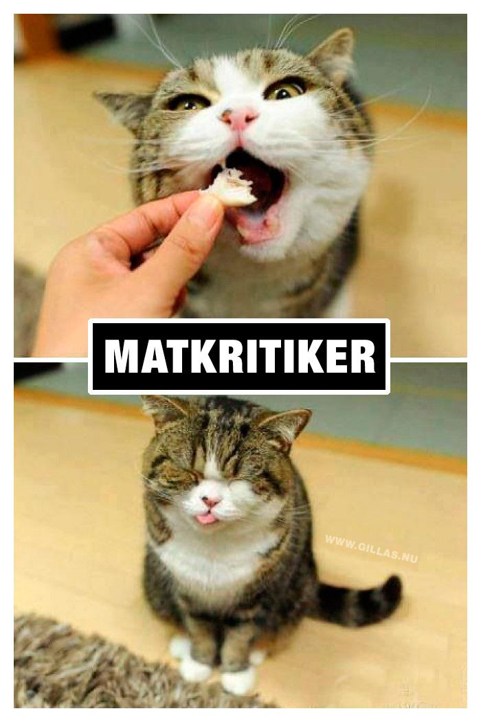 På grund av sin ärlighet är katter de bästa matkritikerna!