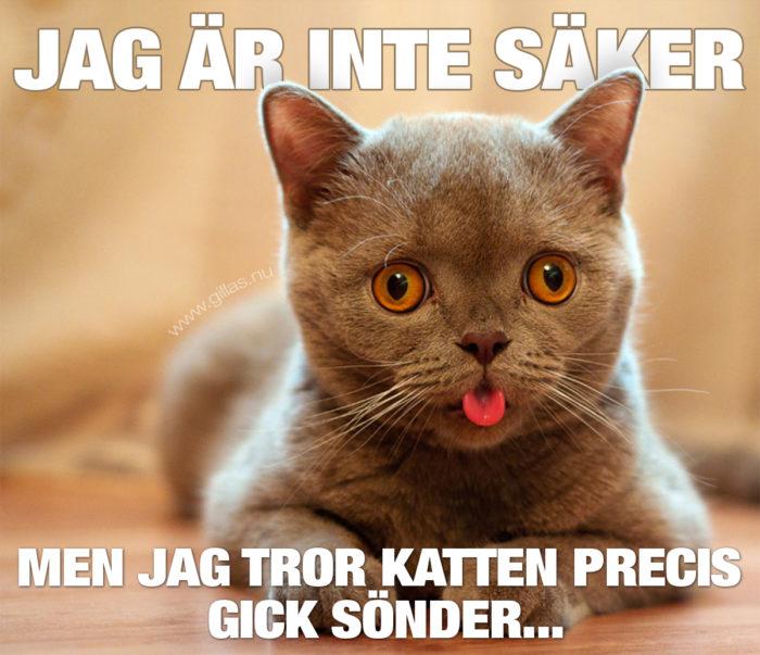När katten glömmer tungan ute…