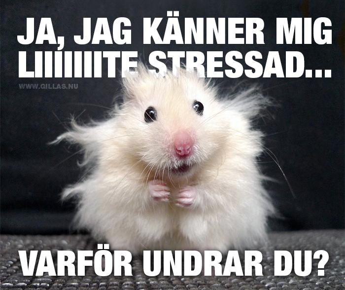 Vissa dagar är stressigare än andra…