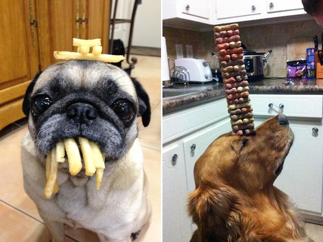 Fantastiska hundar som på något sätt blivit mästare i självbehärskning