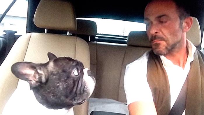 """Den franska bulldogen Junior tolkar Rihannas """"Diamonds"""" i rolig video"""