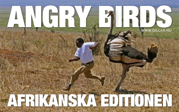 Angry Birds, den afrikanska editionen