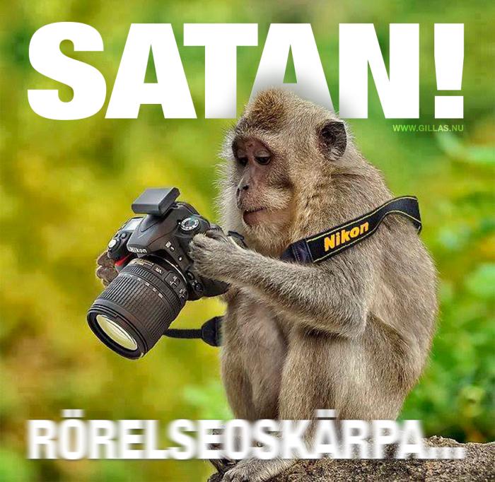 Det går inte alls att lära en apa att fotografera
