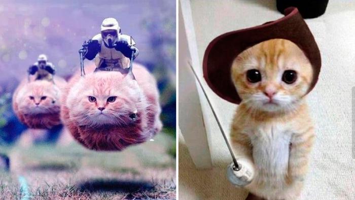 Belgare översvämmar sociala medier med bilder på katter och anledningen är helt underbar!