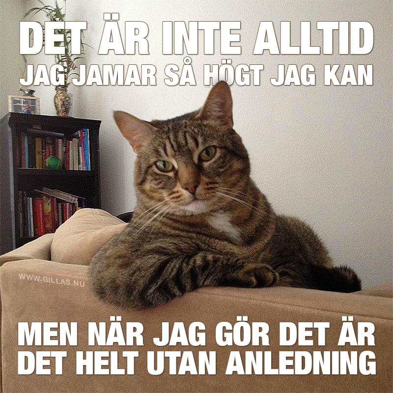 Katt sitter som människa i soffan - Det är inte alltid jag jamar så högt jag kan, men när jag gör det är det helt utan anledning