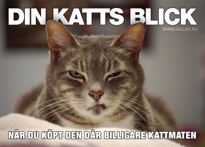 Det är nog bara din katt som kan leverera den här blicken