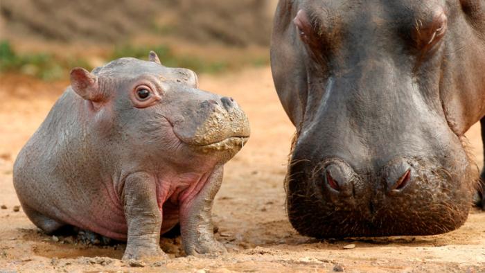 28 underbart roliga bilder som visar hur djur skulle sett ut utan nackar!