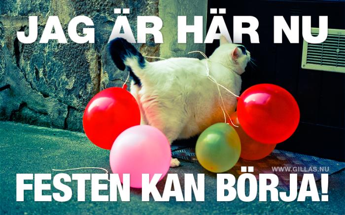 Partyt börjar inte förrän den här katten säger det!
