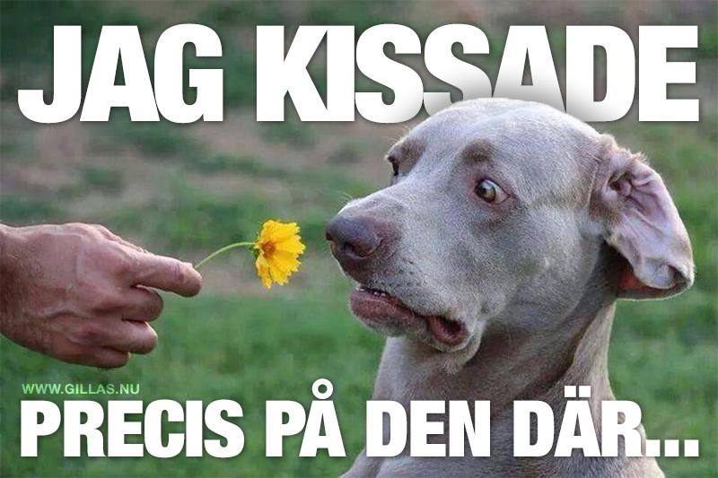 Hund luktar tveksamt på blomma - Jag kissade precis på den där...