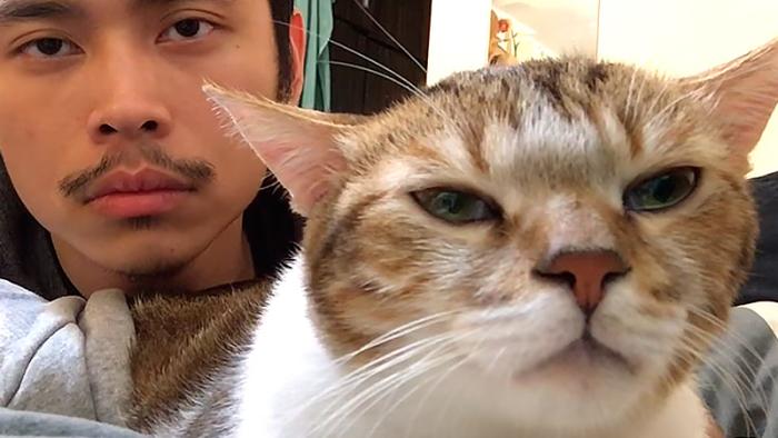 """Supersöta katten Duchi diggar till låten """"Hotline Bling"""" i härlig video"""
