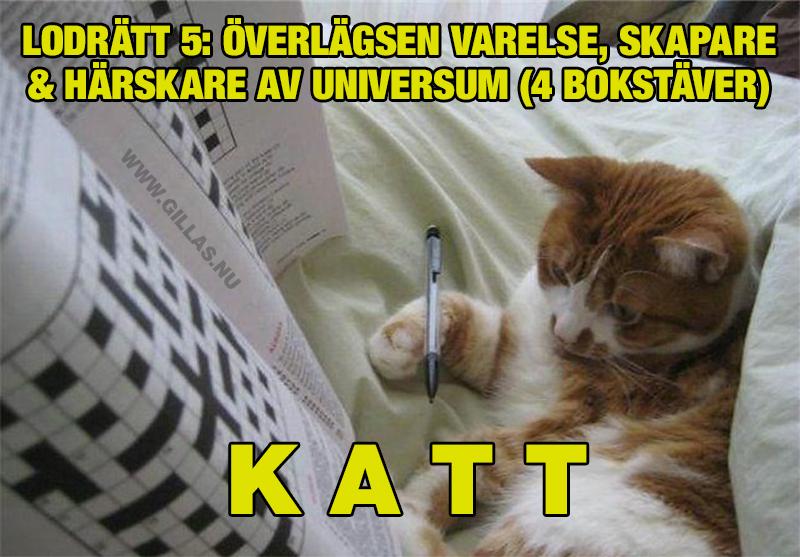 Katt som löser korsord - Överlägsen varelse, skapare och härskare av universum