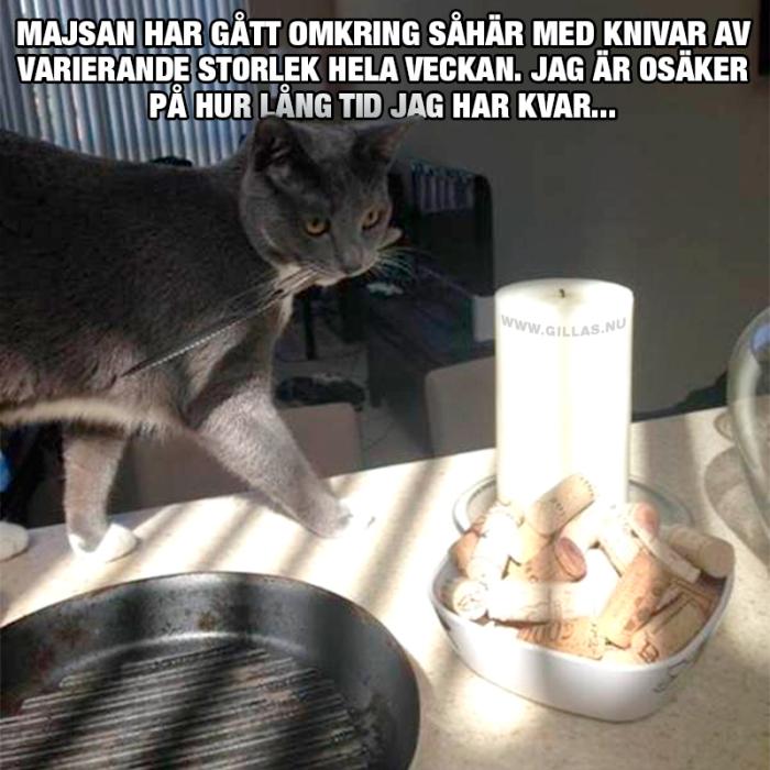 Jag är ganska säker på att den här katten planerar något…