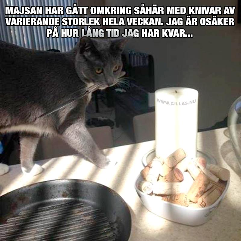 Katt går omkring med kniv i munnen på matbord - Jag är osäker på hur lång tid jag har kvar