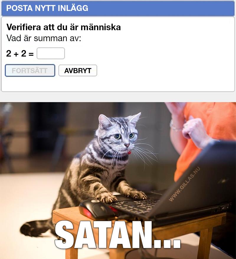 Katt framför laptop - Verifiera att du är människa