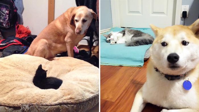 Tjugotre kaxiga och söta katter som lagt beslag på hundsängen