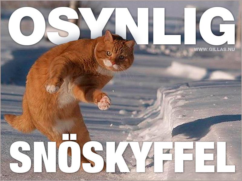Katt i snön - Ser ut att hålla en osynlig snöskyffel