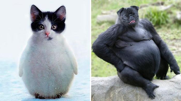 Tjugosju fascinerande djurhybrider du aldrig trodde du skulle få se!