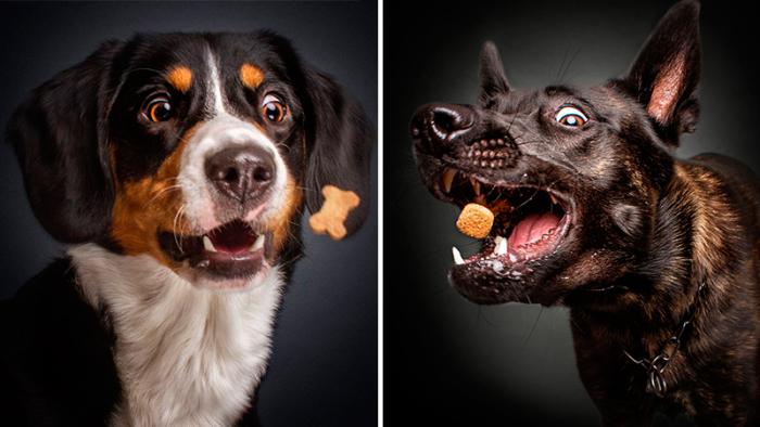 Nio härliga fotografier på hundar som fångar godsaker
