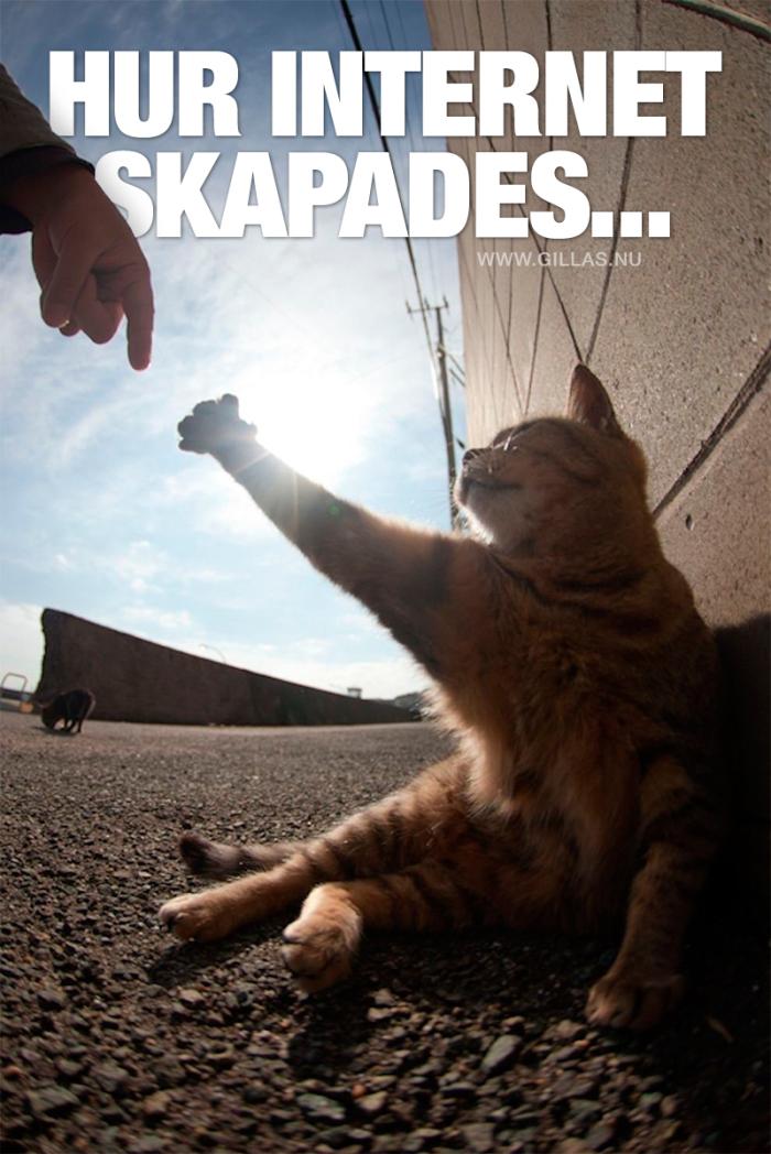 Den där härliga känslan av att Internet till 99% består av kattbilder