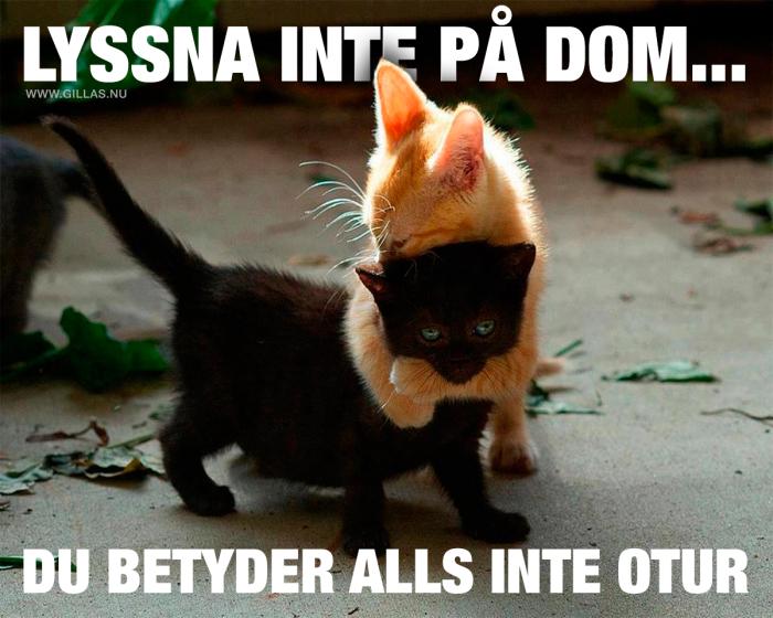 Vänskap katter emellan vet inga gränser