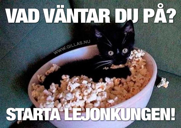 En vanlig filmkväll med katten