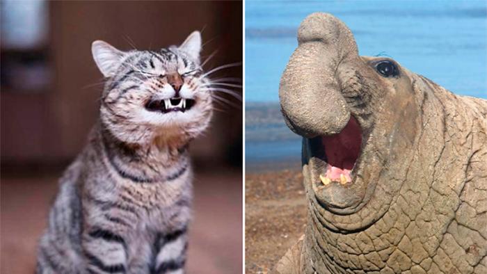 Tjugosju underbara djurbilder som påminner oss om att ett leende smittar!