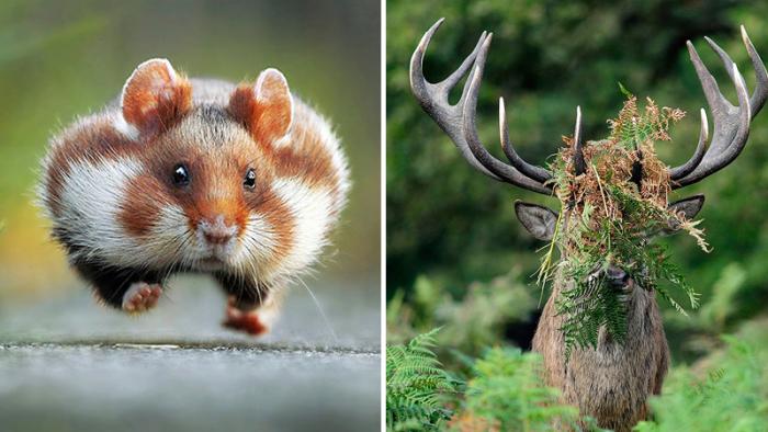 Tretton bilder som visar att vilda djur är allt annat än tråkiga