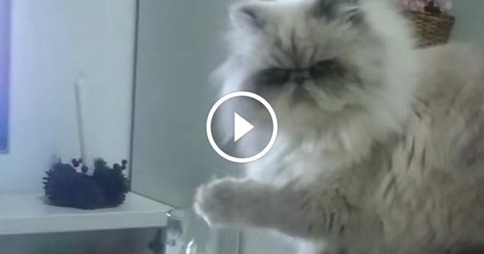 Det är inte alltid man gör som man blir tillsagd – speciellt inte när man är katt!