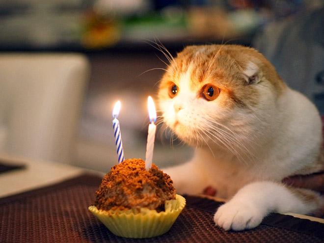 födelsedag roliga bilder Tjugofyra hjärtevärmande bilder på djur som firas på sin  födelsedag roliga bilder