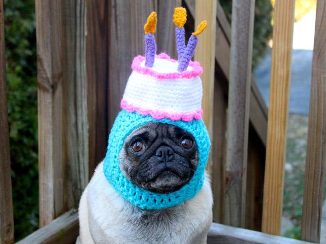 roliga bilder födelsedag Tjugofyra hjärtevärmande bilder på djur som firas på sin  roliga bilder födelsedag