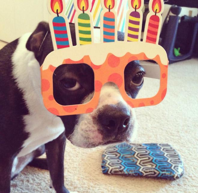 roliga bilder till födelsedag Tjugofyra hjärtevärmande bilder på djur som firas på sin  roliga bilder till födelsedag