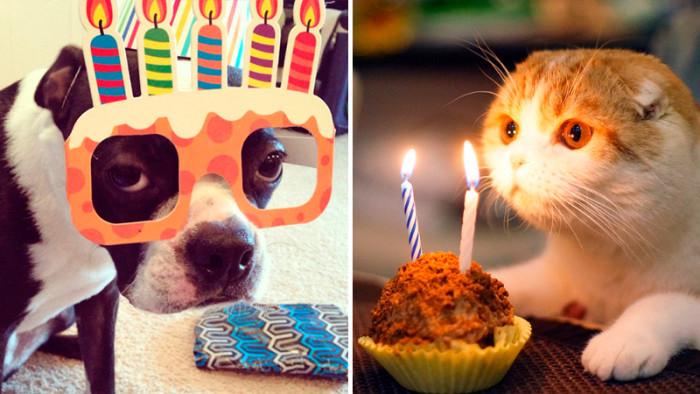 Tjugofyra hjärtevärmande bilder på djur som firas på sin födelsedag!