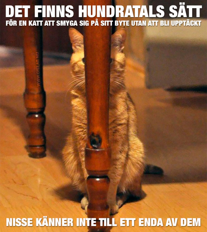 Nisse verkar inte ha hört det här med att katter är fantastiskt duktiga  jägare eceaf79f8266b