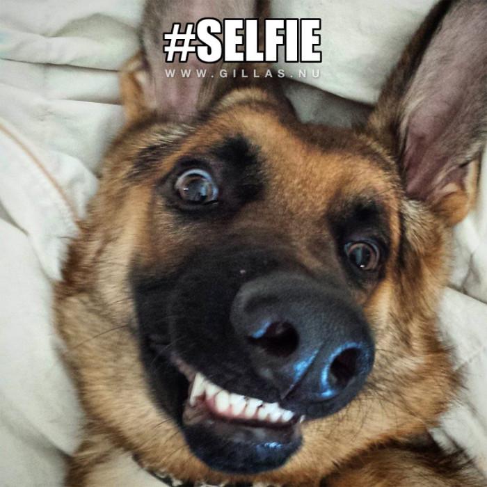 Det bästa med selfies är att man själv kan rata de man inte är nöjd med
