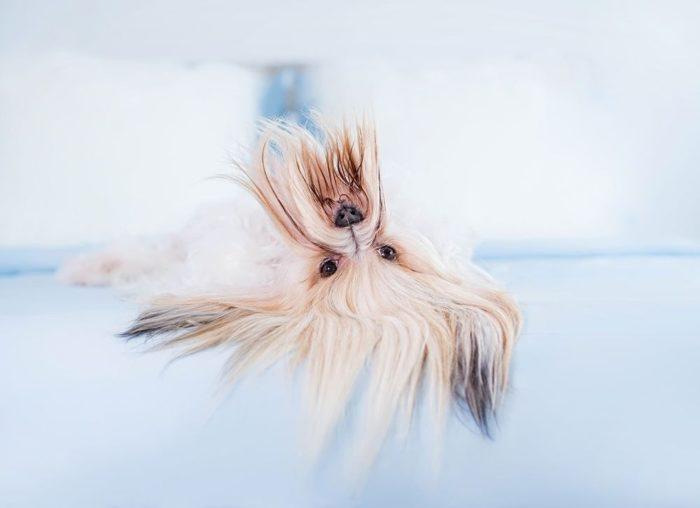 roliga-bilder-djur-i-en-annorlunda-vinkel-02
