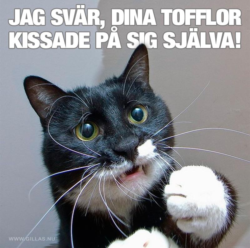 Oskyldig katt - Jag svär, dina tofflor kissade på sig själva!