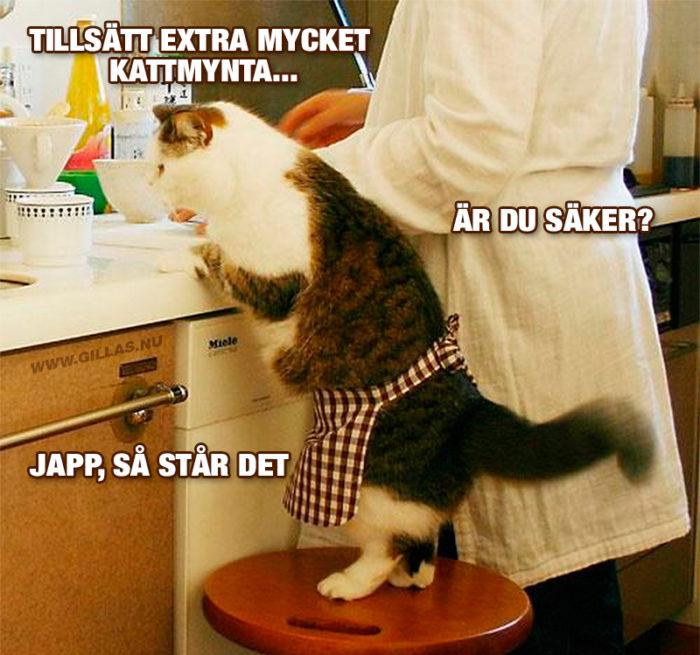 Katter är bra till mycket, men i köket skulle de nog vara rätt värdelösa