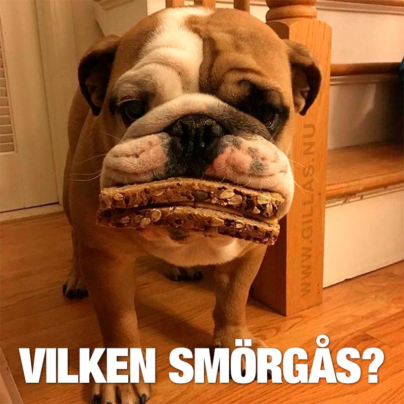 Hund med smörgås i munnen - Vilken smörgås?