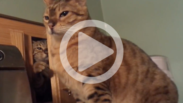 De som inte har katt blir nog ganska förvånade över dessa katters attityd
