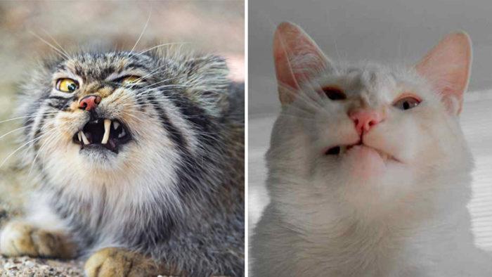 Trettioen supersöta katter som för ett ögonblick tappat sin fotolook