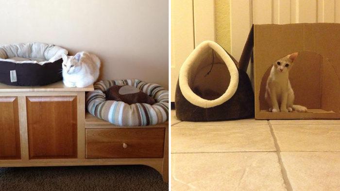 Tjugo katter som med största tydlighet visar vad de tycker om dina presenter