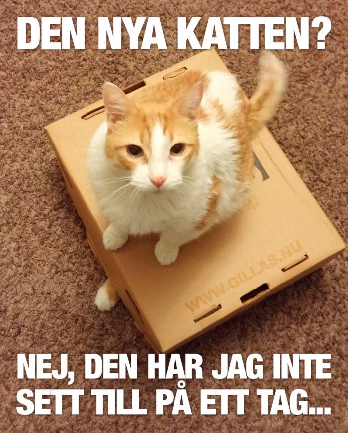 Lita inte på den här katten!