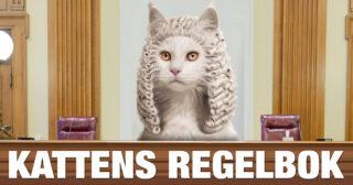 Åtta regler för katter som ofta efterlevs till punkt och pricka
