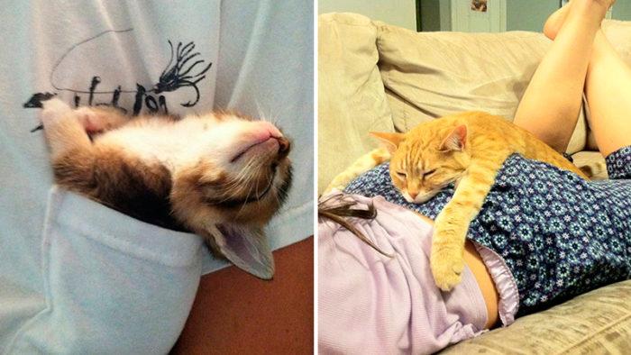 Tjugofyra mysiga sällskapsdjur som inte bryr sig ett dugg om var du tycker att de ska sova!